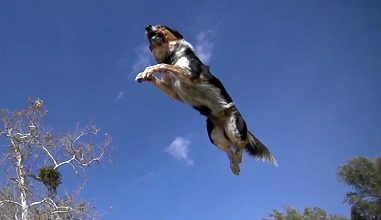 Photo of Alex & Jumpy – The Parkour Dog
