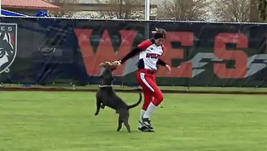Photo of Dog Steals the Show at WOU Softball