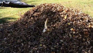 Photo of Stella's Leaf Pile