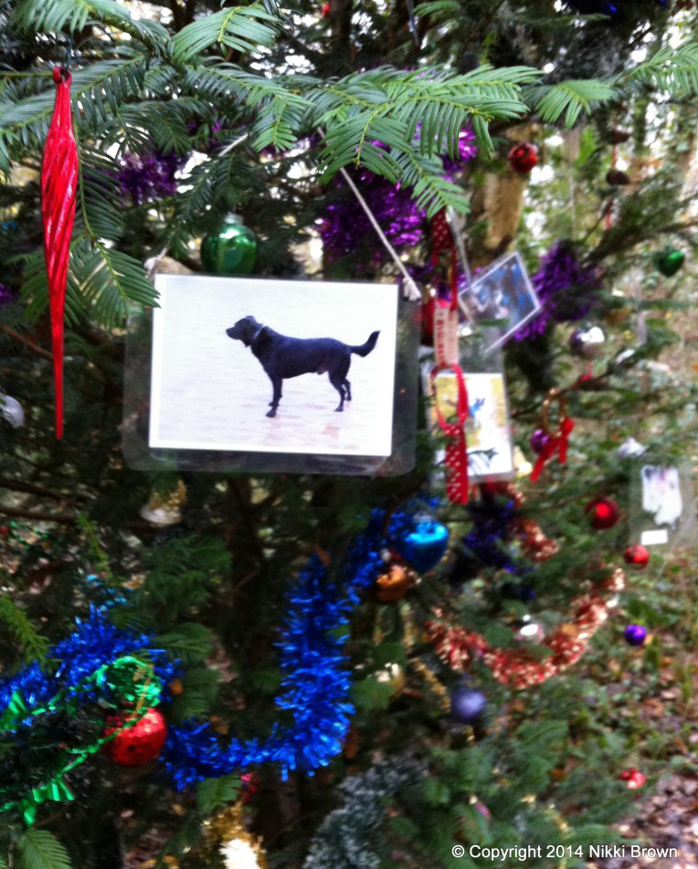 dog tree of remembrance