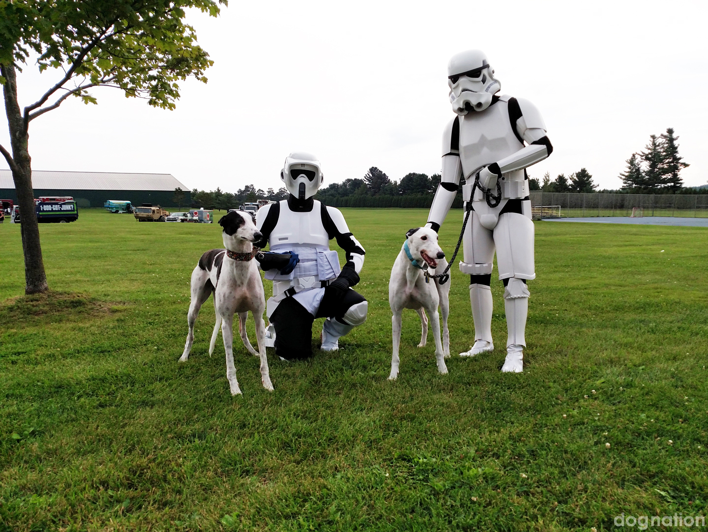 wordless wednesday 341, star wars, storm troopers, greyhounds