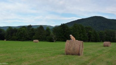 dog on a hay bale