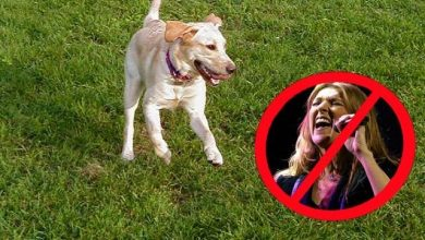 Photo of Celine Dion is not a dog.