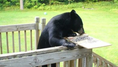 Photo of Bear With Me
