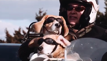 Photo of Sidecar Dogs