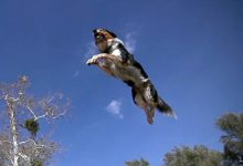 Photo of Alex & Jumpy – The Parkour Dog