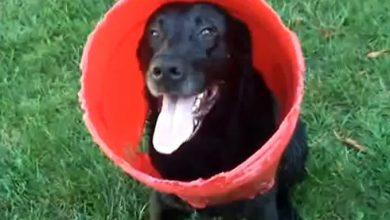 Photo of Charcoal And His Bucket