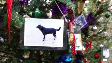 Photo of The Tree of Remembrance: A Magical, Mysterious Pet Memorial