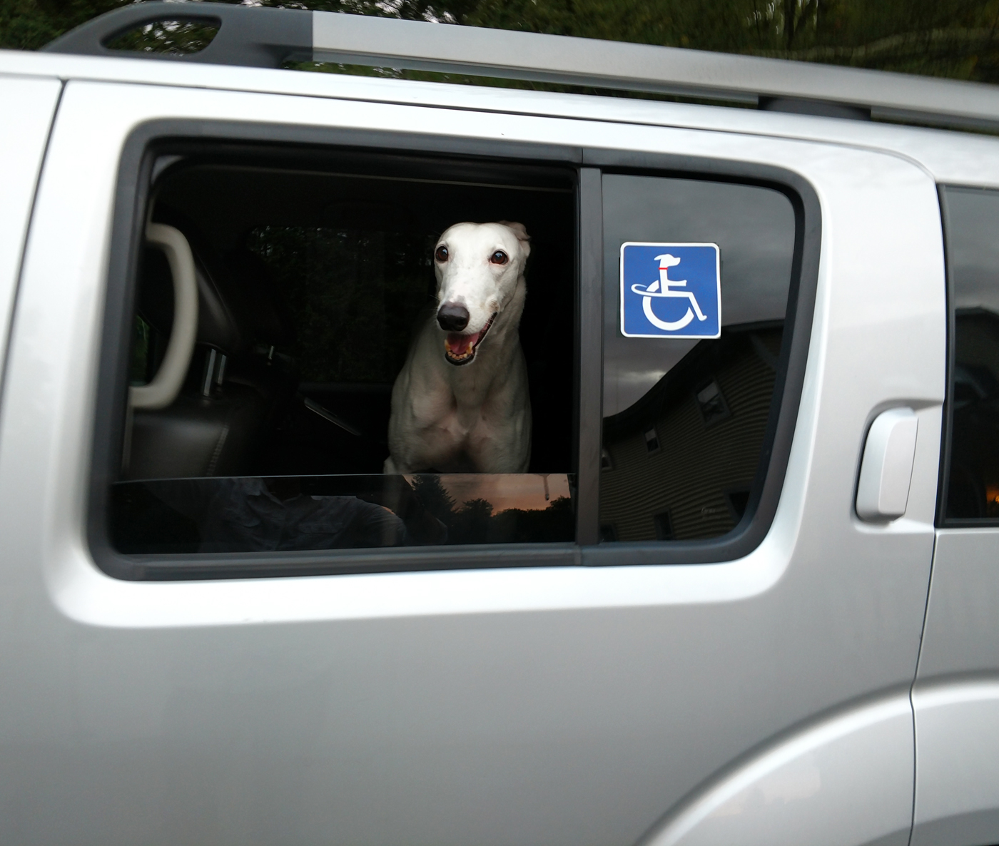 handicapped dog window decal